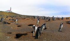 00_Isla-Magdalena-05_pinguini
