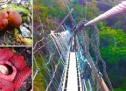 Il Borneo – Giuseppe Stinca intervista Naty June