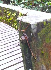 Passerella_Foto-Borneo-Gloria-(382)
