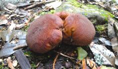 Semi_palma_Foto-Borneo-Mamma-(690)